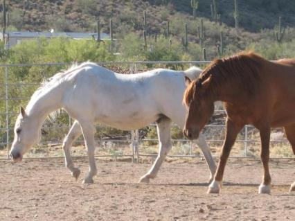 Arabian Cloud and Mustang Peanut.